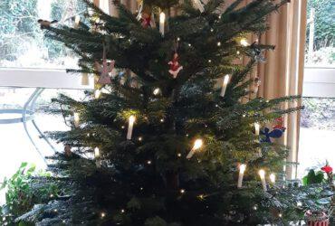 Start Opniew - Kerstboom